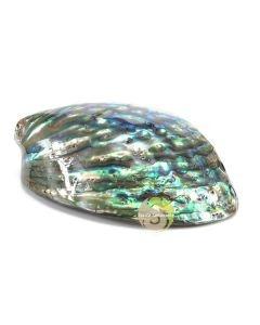 Abalone polie pour fumigation