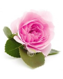 Eau florale rose de Damas Bio