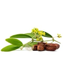 Huile végétale de jojoba Bio